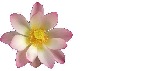 Thai Lotus Restaurant