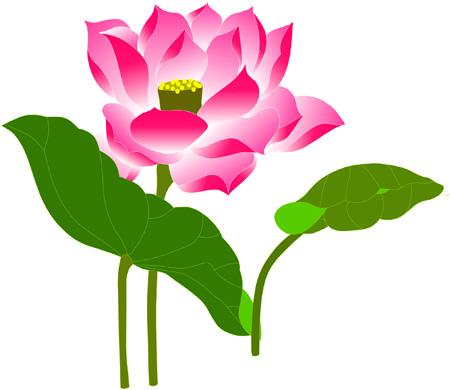 Thai Lotus Restaurant Napier